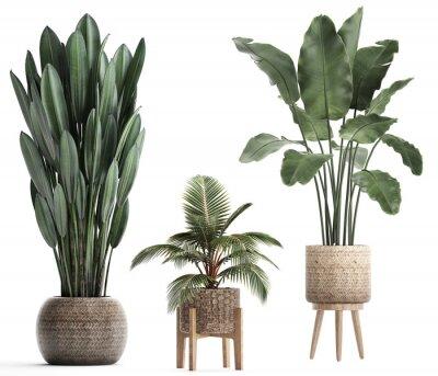 Adesivo 3d illustration of tropical plants banana