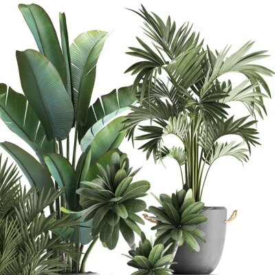 Adesivo 3d illustration of tropical plants on white background