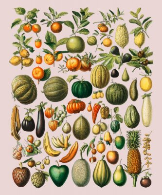 Adesivo A vintage illustration of a wide variety of fruits and vegetables from the book, Nouveau Larousse Illustre (1898), by Larousse, Pierre, Augé and Claude, Digitally enhanced by rawpixel.