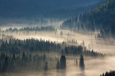 Adesivo abeti su un prato lungo la volontà di bosco di conifere in montagne nebbiose