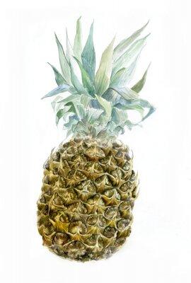 Adesivo Acquerello ananas isolato su bianco