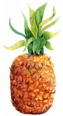 Adesivo Acquerello ananas su sfondo bianco