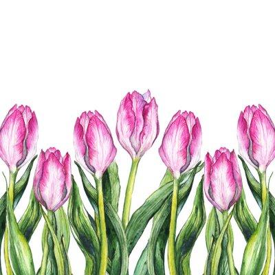 Adesivo Acquerello fiore rosa tulipano telaio carattere confine