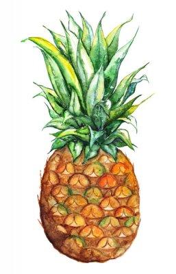 Adesivo Acquerello mano ananas disegnato esotica frutta tropicale isolato