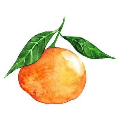 Adesivo Acquerello maturo arancione mandarino agrumi isolato