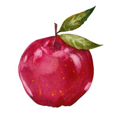 Adesivo acquerello mela rossa