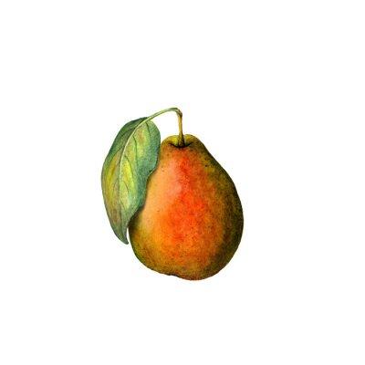 Adesivo Acquerello pera