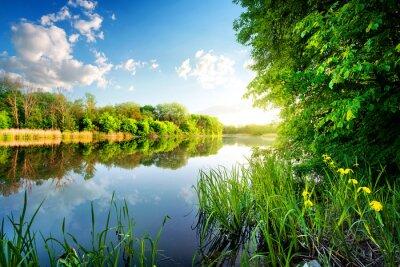Adesivo Alberi tranquillo fiume