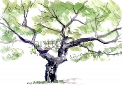Adesivo albero, acquerello