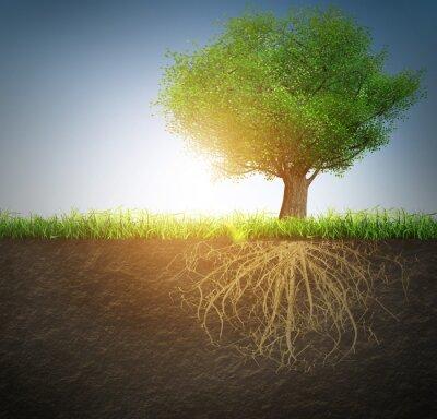 Adesivo albero con radici