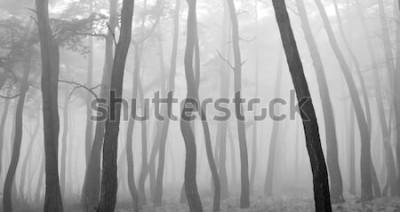 Adesivo Albero di pino visto attraverso la nebbia