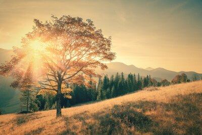 Adesivo Albero e Sunbeam paesaggio caldo giorno in vintage tonica
