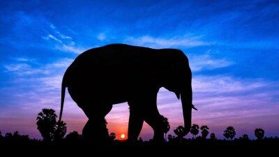 Adesivo Albero Elephant andpPalm in tempo crepuscolo