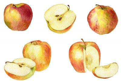 Adesivo Apple ha disegno di acquerello