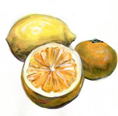 Adesivo Arancio, limone, mandarino. Agrumi. pittura ad acquerello