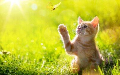 Adesivo Arte Giovane gatto / gattino caccia una coccinella con Controluce