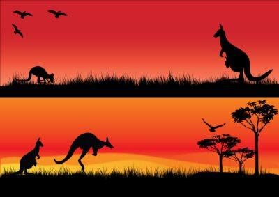 Adesivo Australian Kangaroos in the sunset