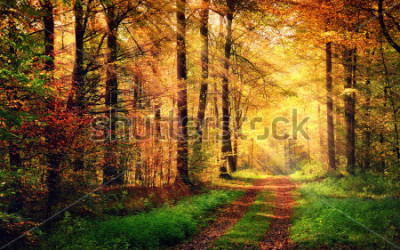 Adesivo Autumn forest scenery with rays of warm light illumining the gold foliage and a footpath leading into the scene