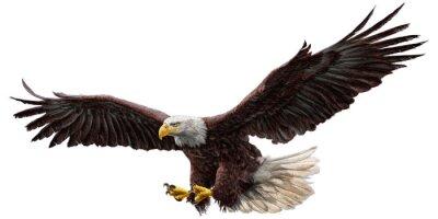 Adesivo Bald Eagle Flying disegnare e dipingere su sfondo bianco illustrazione vettoriale.