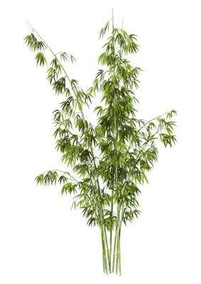 Adesivo Bamboo Tree