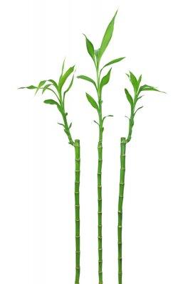 Adesivo bambou