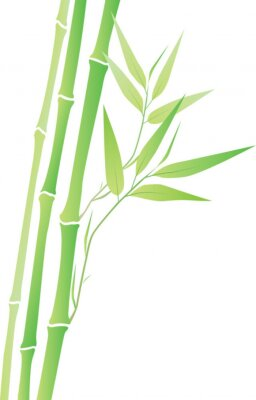 Adesivo Bambù