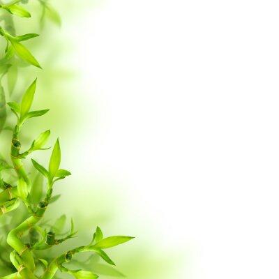 Adesivo Bambù e foglie verdi, sfondo