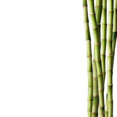 Adesivo Bambù fresco con foresta di bambù in background