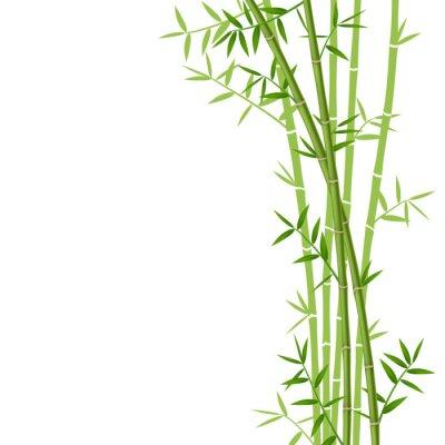 Adesivo Bambù verde su sfondo bianco, illustrazione vettoriale