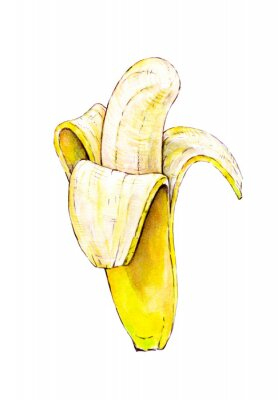 Adesivo Banana isolated on white background. Watercolor colourful illustration. Tropical fruit. Handwork