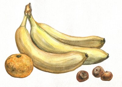 Adesivo Banana, mandarino e nocciole. pittura ad acquerello