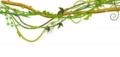 Adesivo Banner di rami di liane selvatiche contorto.