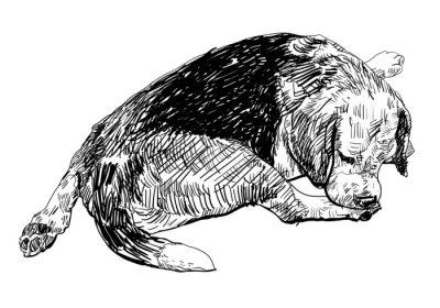 Adesivo Beagle è mordere dolcemente su di essa la gamba.