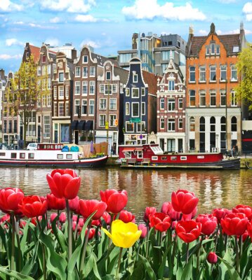 Adesivo Bel paesaggio con tulipani e case in Amsterdam, Olanda