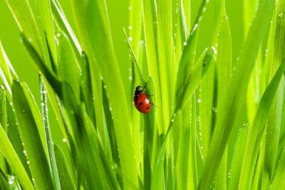 Adesivo bella coccinella sul prato verde