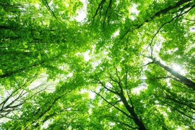Adesivo bella foresta verde