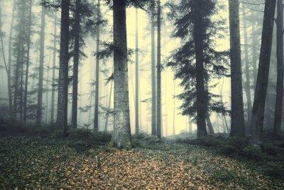 Adesivo Bella nebbia albero della foresta delle fiabe. luce nebbiosa magia nella foresta.