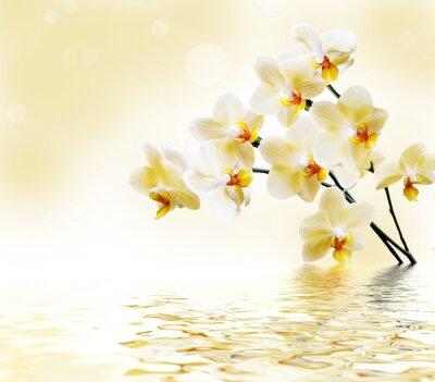 Adesivo Bella orchidea bianca