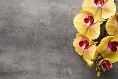 Adesivo Bella orchidea rosa su uno sfondo grigio.