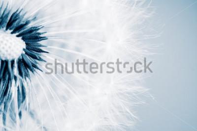 Adesivo Bello dente di leone con i semi, primo piano