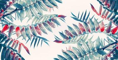 Adesivo Bello sfondo tropicale foglie, banner