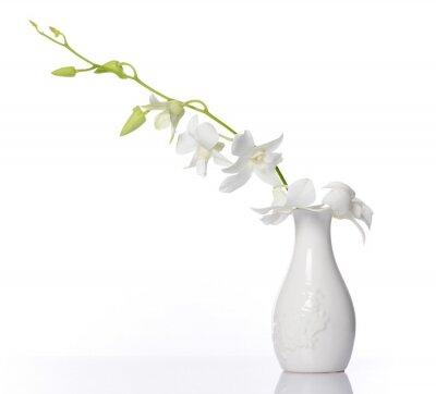 Adesivo bianco orchidea