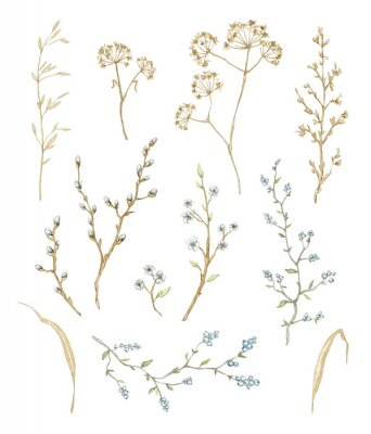Adesivo Big set with dry herbs, willow branches and twigs with flowers and berries isolated on white background. Watercolor hand drawn illustration
