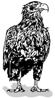 Adesivo Black and White Eagle - Illustrazione Delineato, vettoriale