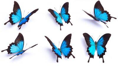 Adesivo Blu e colorata farfalla su sfondo bianco