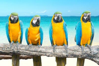 Adesivo Blu e oro Ara sulla bella spiaggia tropicale e mare