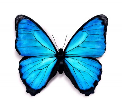 Adesivo Blue butterfly