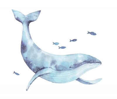 Adesivo Blue whale watercolor illustration isolated on white. Big wild underwater animal beautiful blue violet white watercolor whale ballena painting. Mammal marine or oceanic water animal swimming.
