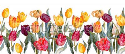 Adesivo Bordo orizzontale floreale. Tulipani colorati su priorità bassa bianca. Illustrazione botanica. Pittura ad acquerello