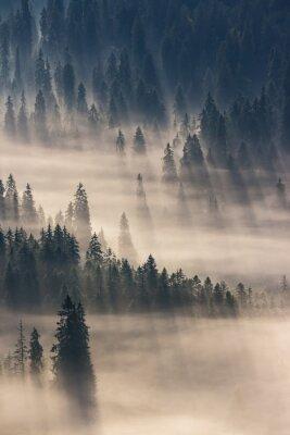 Adesivo bosco di conifere in montagne nebbiose